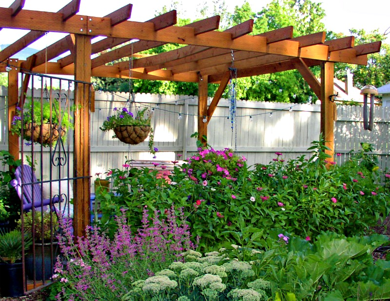 Pergola With Vines : An easy guide to building the perfect pergola - ServiceSeeking Blog