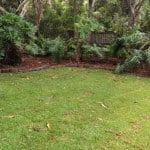 Michael's overgrown backyard