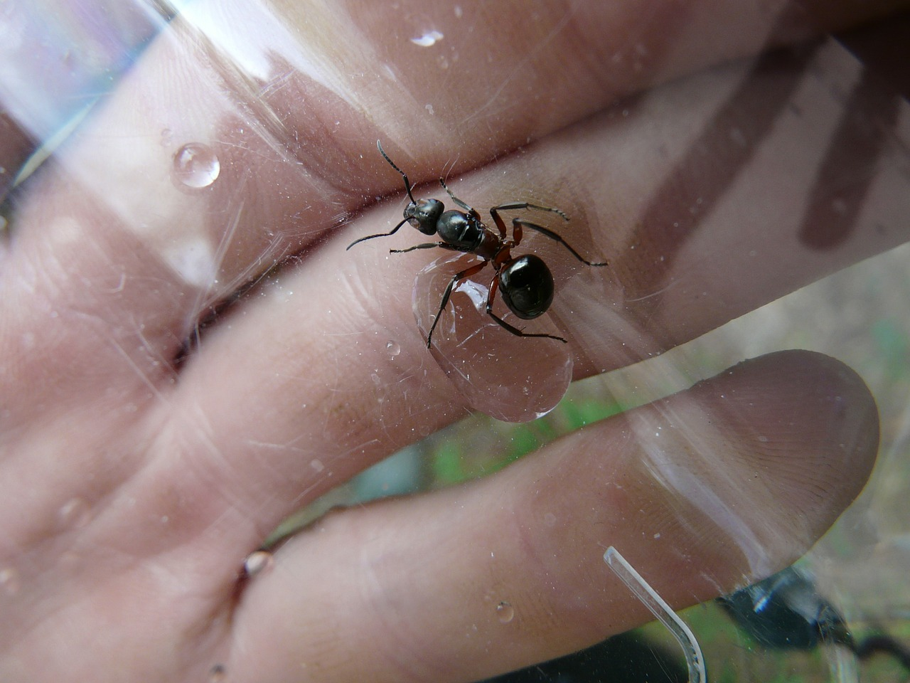 Ant on hand palm