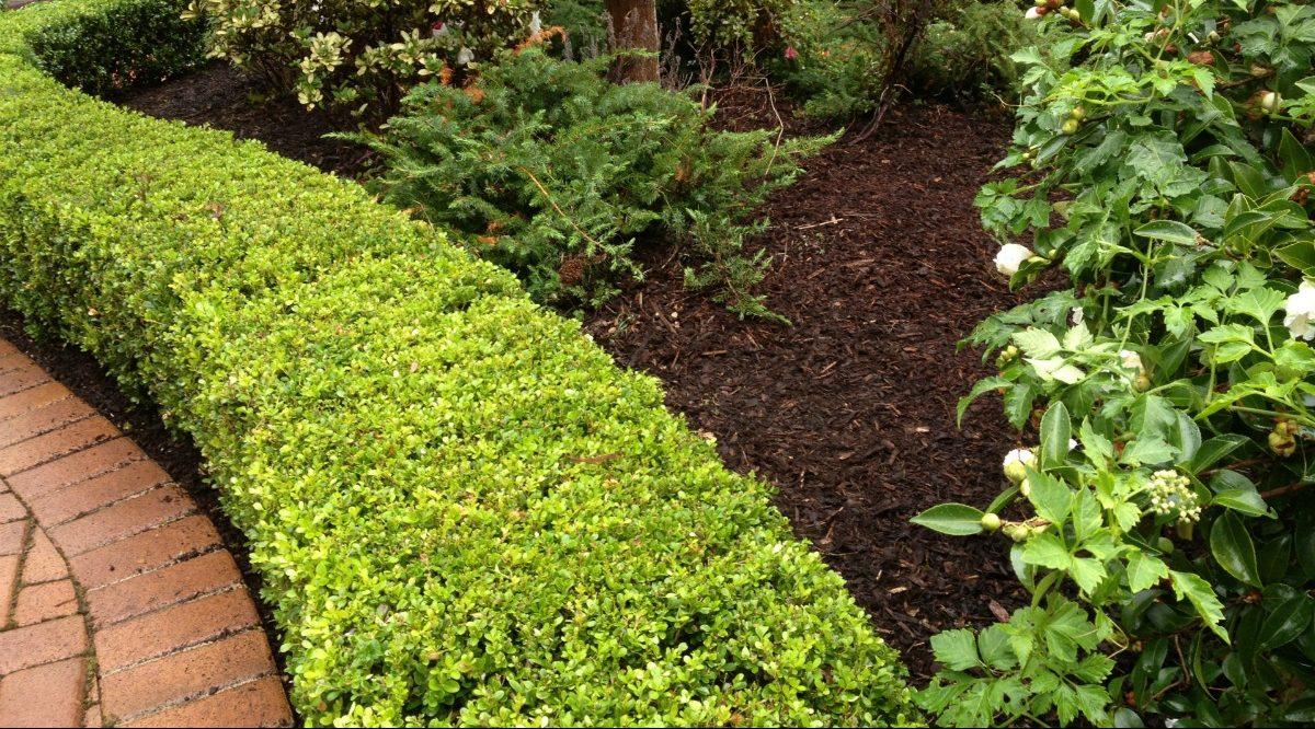 pruning and gardening