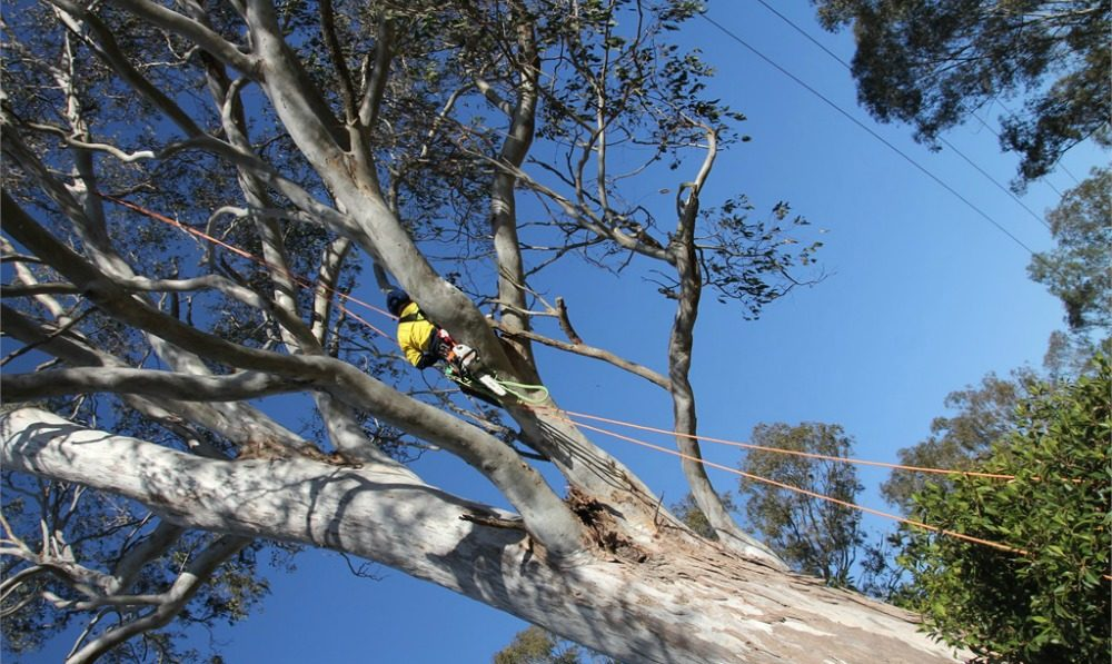 Professional Aussie tree pruning
