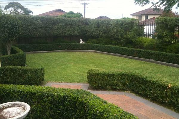 Bushes and lawn grasses for landscaping