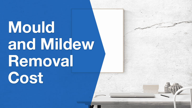 mould and mildew banner