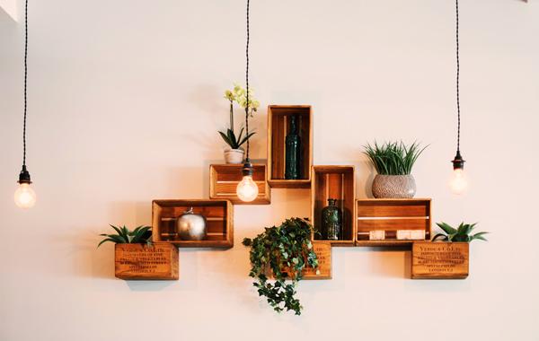 contemporary decoration plant